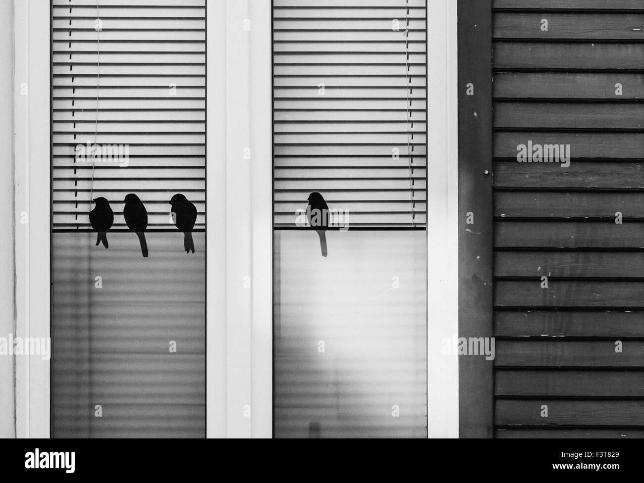 Black birds at the window Stock Photo