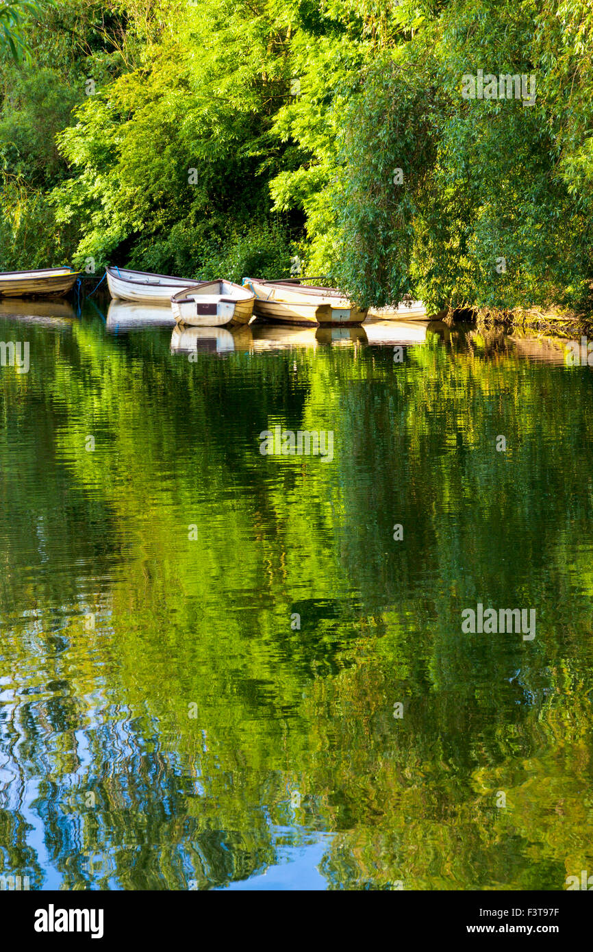 Early morning sunlight on rowing boats on a lake in woodland Colwick Country Park, Nottingham, Nottinghamshire, - Stock Image