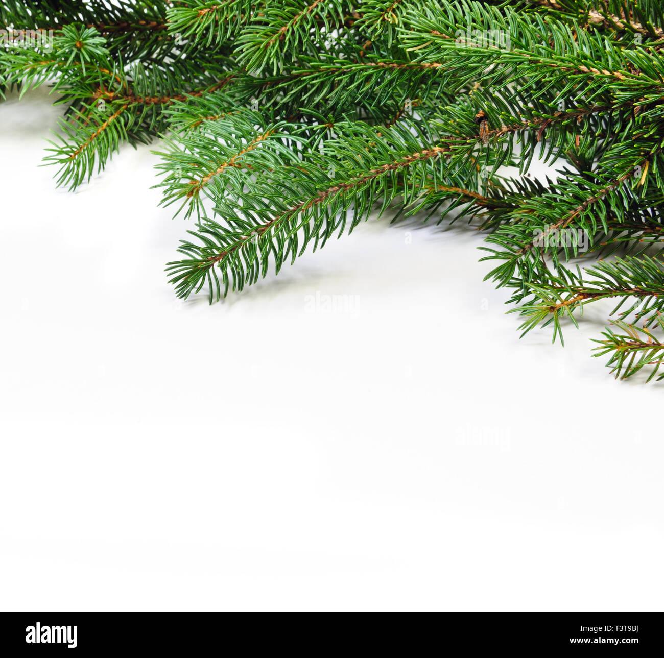 Christmas Greenery Images.Christmas Greenery Stock Photos Christmas Greenery Stock