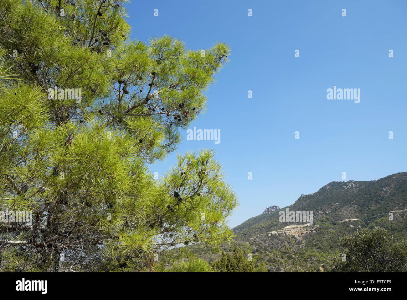 North Cyprus  landscape and pine tree in autumn KATHY DEWITT - Stock Image