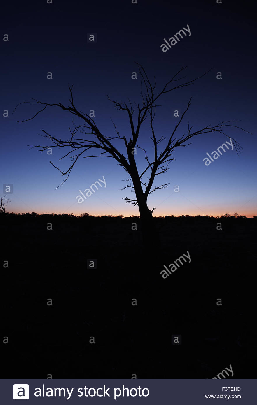 silhouette of a tree at sunset in outback NSW, Australia - Stock Image