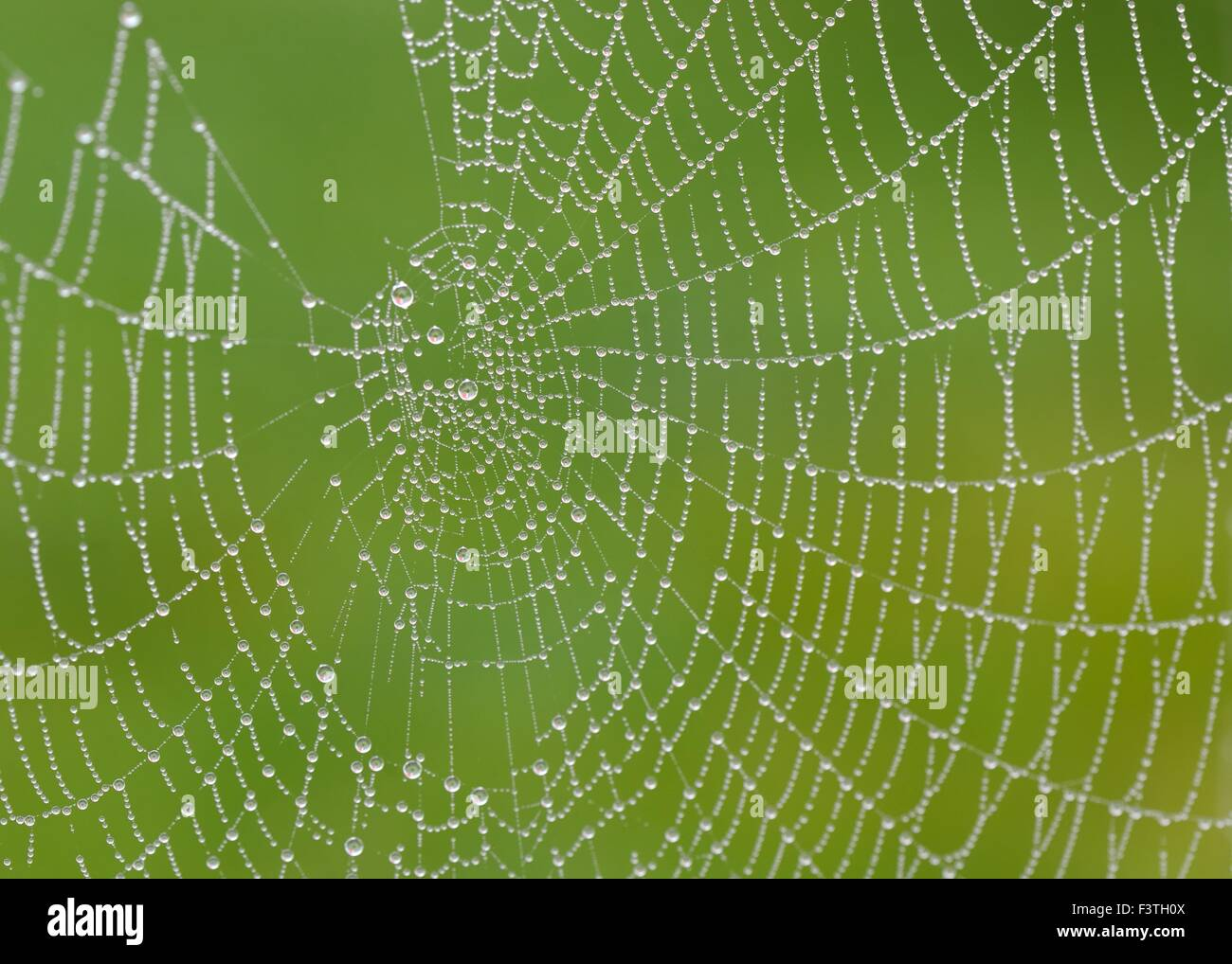 Heavy early morning moisture in the air settles on this spiders web - Stock Image