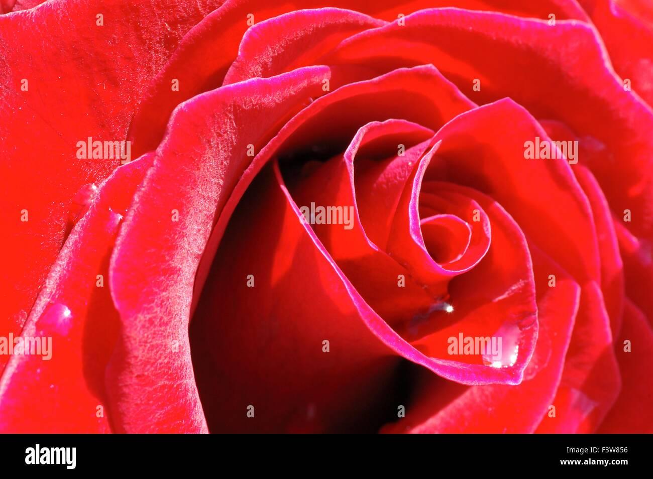 tenderness - Stock Image
