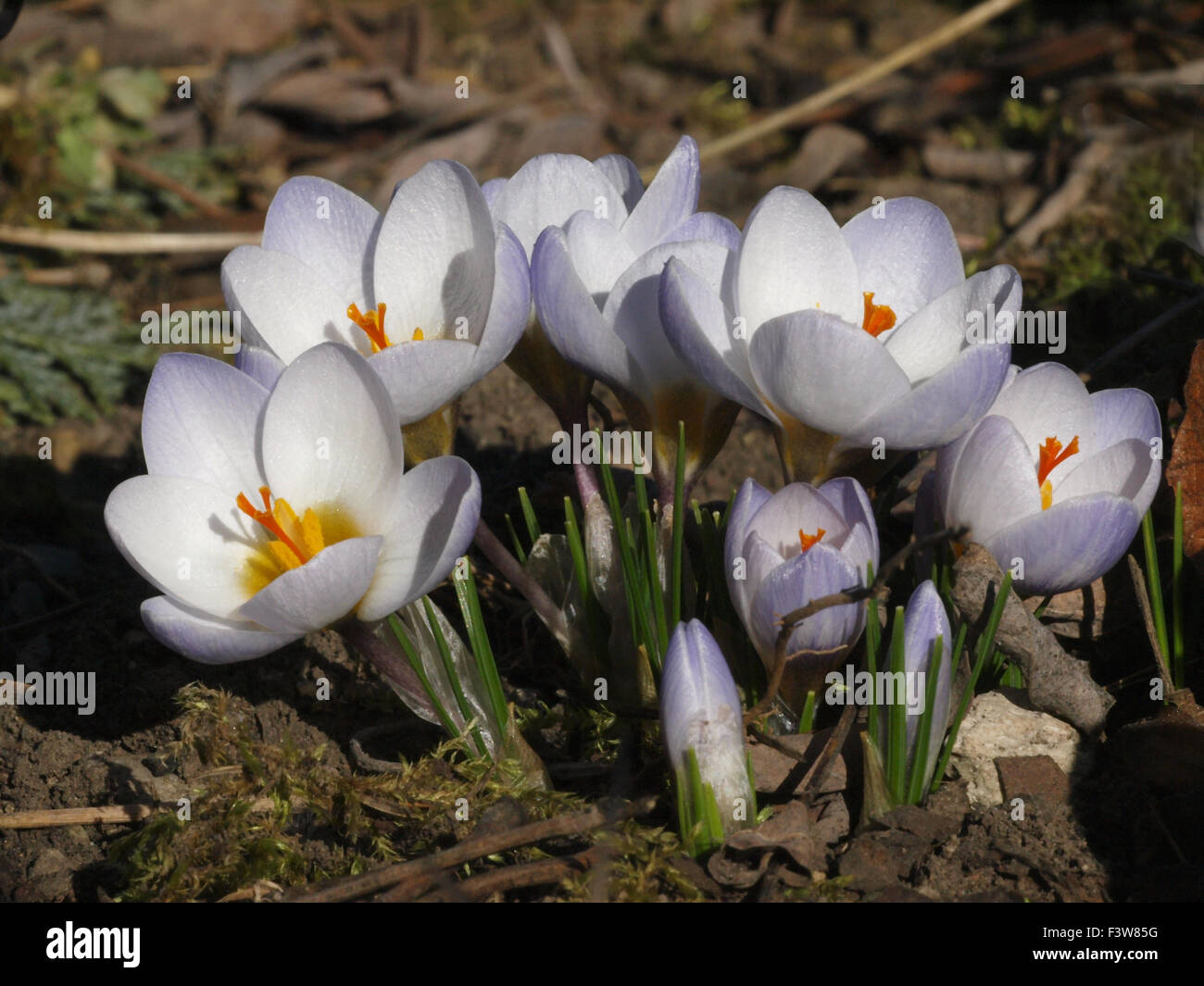 Spring Awakening - Stock Image