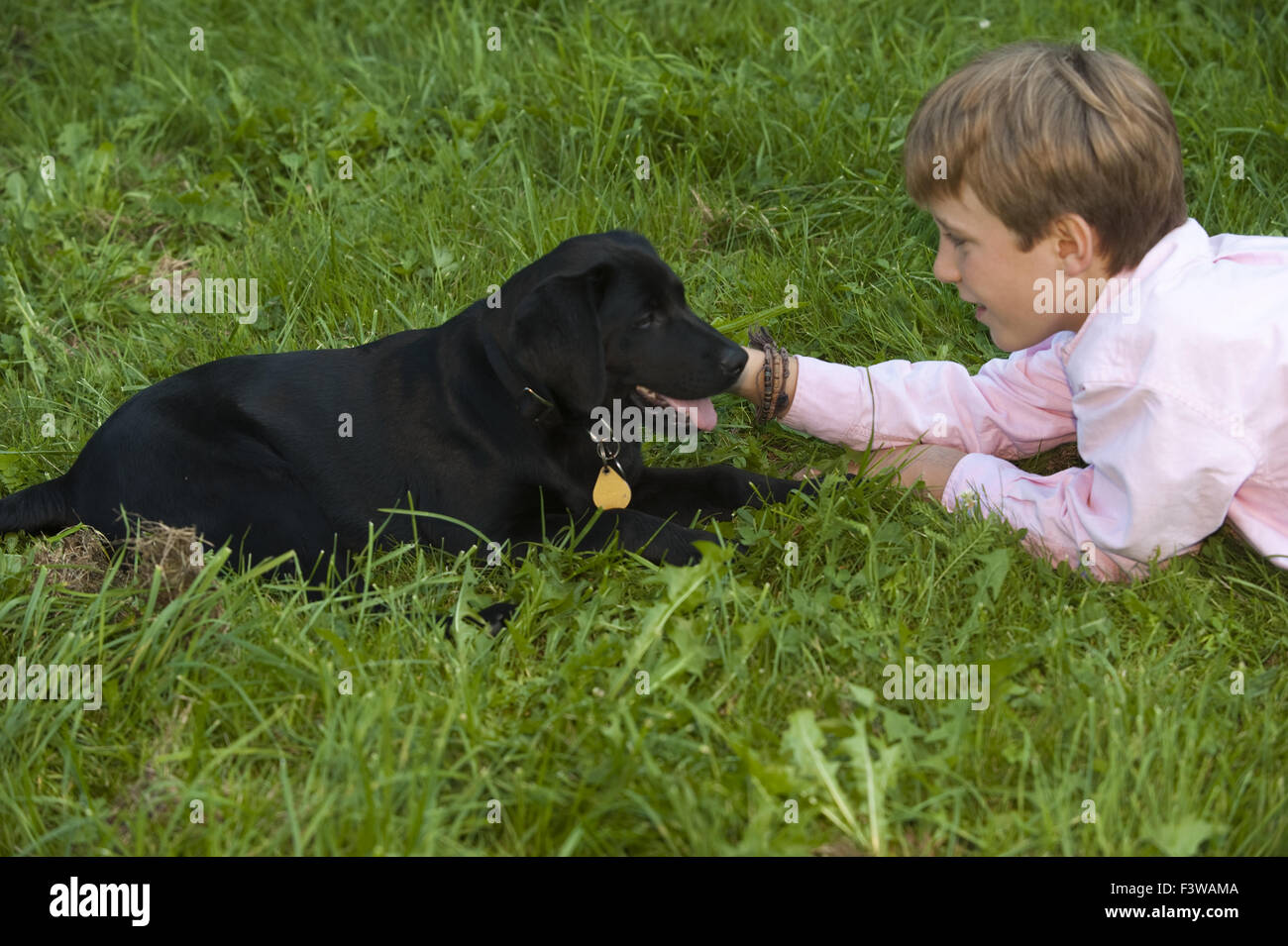 Boy with Labrador puppy - Stock Image