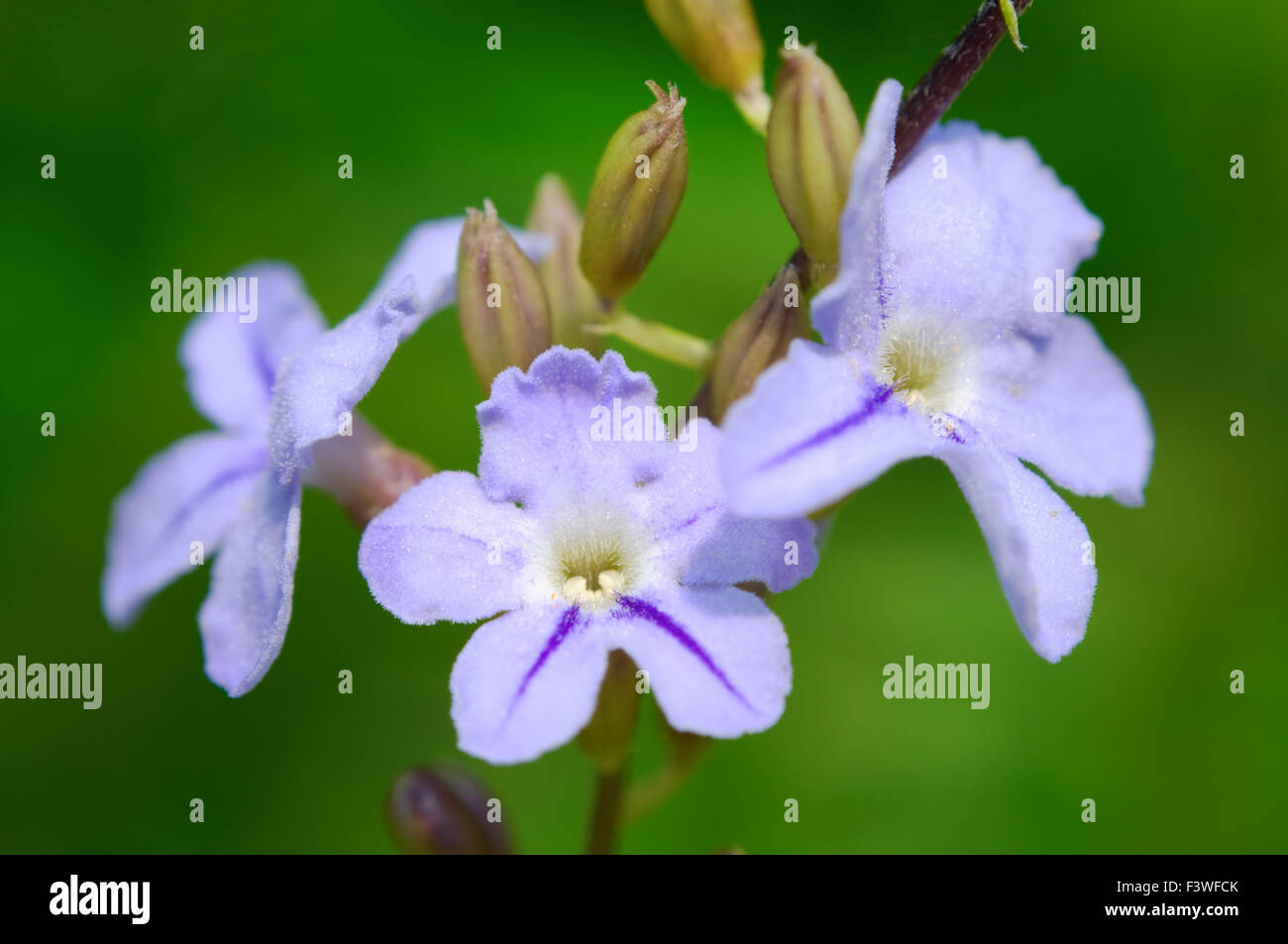 The small pinky road flowers with details - Stock Image