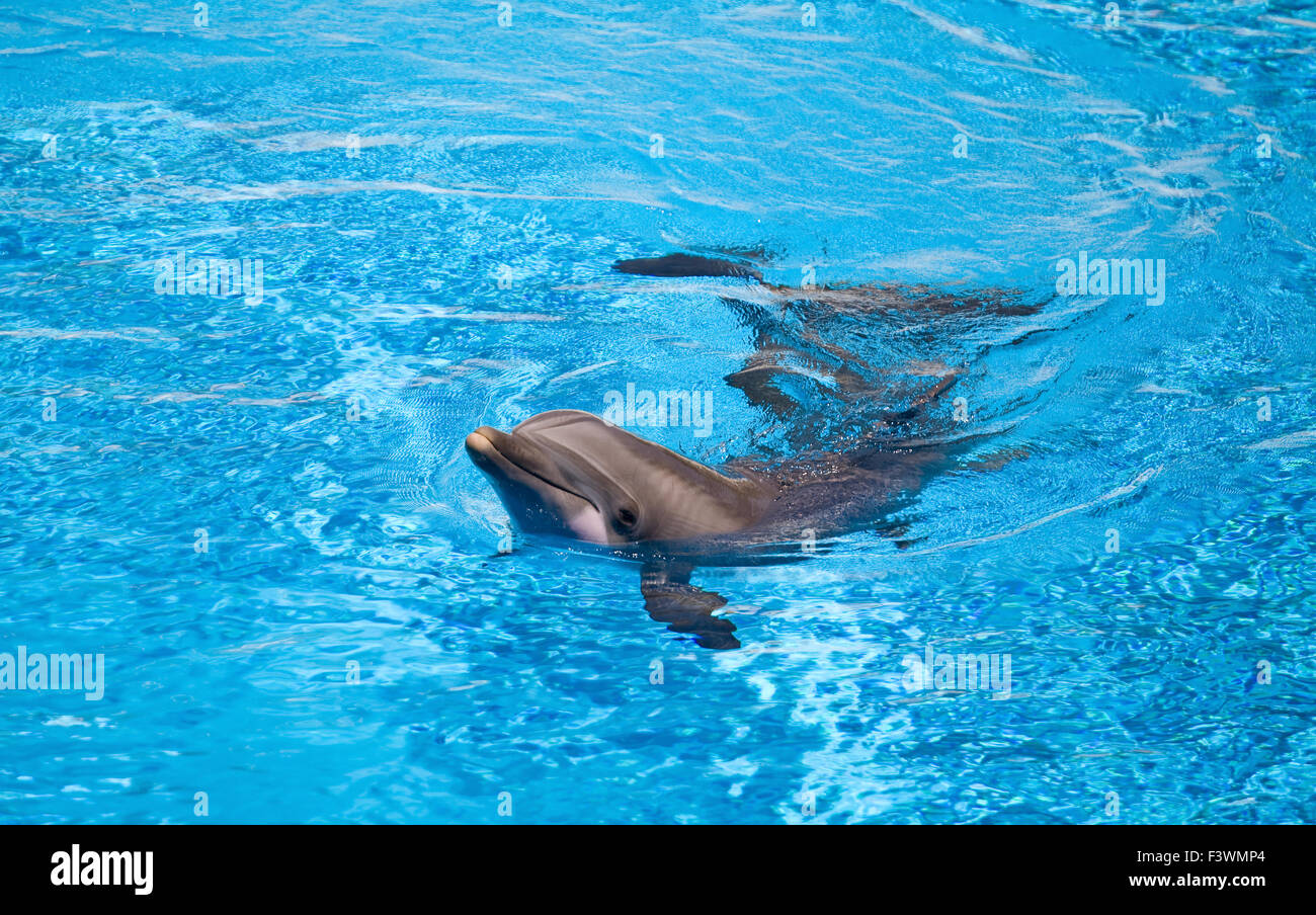 Young dolphin - Stock Image