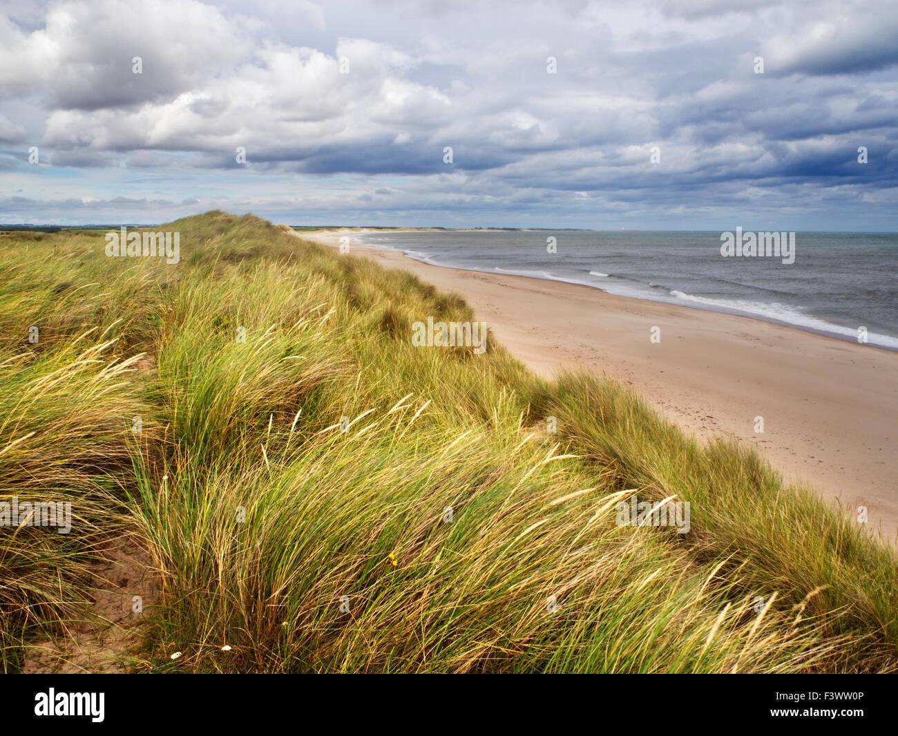Dune Grasses at Druridge Bay near Amble by the Sea on the Northumberland Coast England - Stock Image