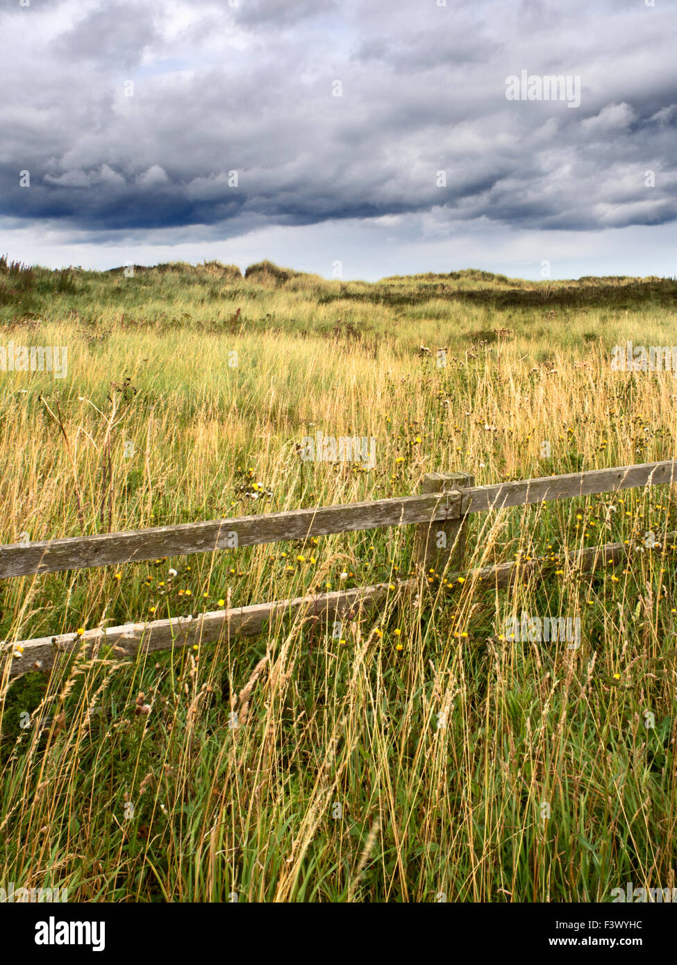 Fence and Dune Grasses under a Dark Sky near Amble Northumberland England - Stock Image