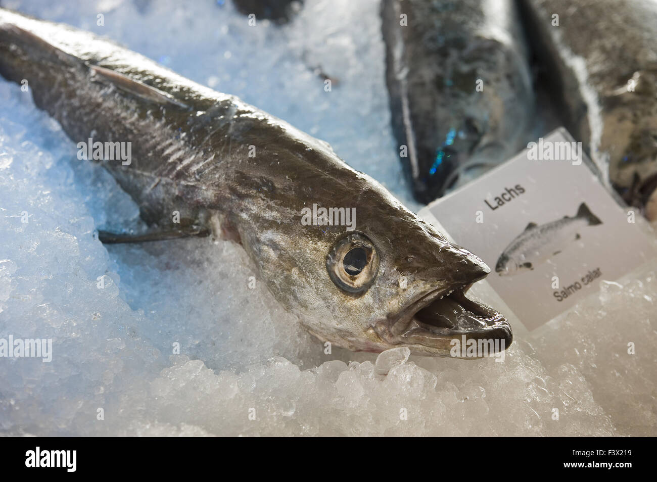 Salmon - Stock Image