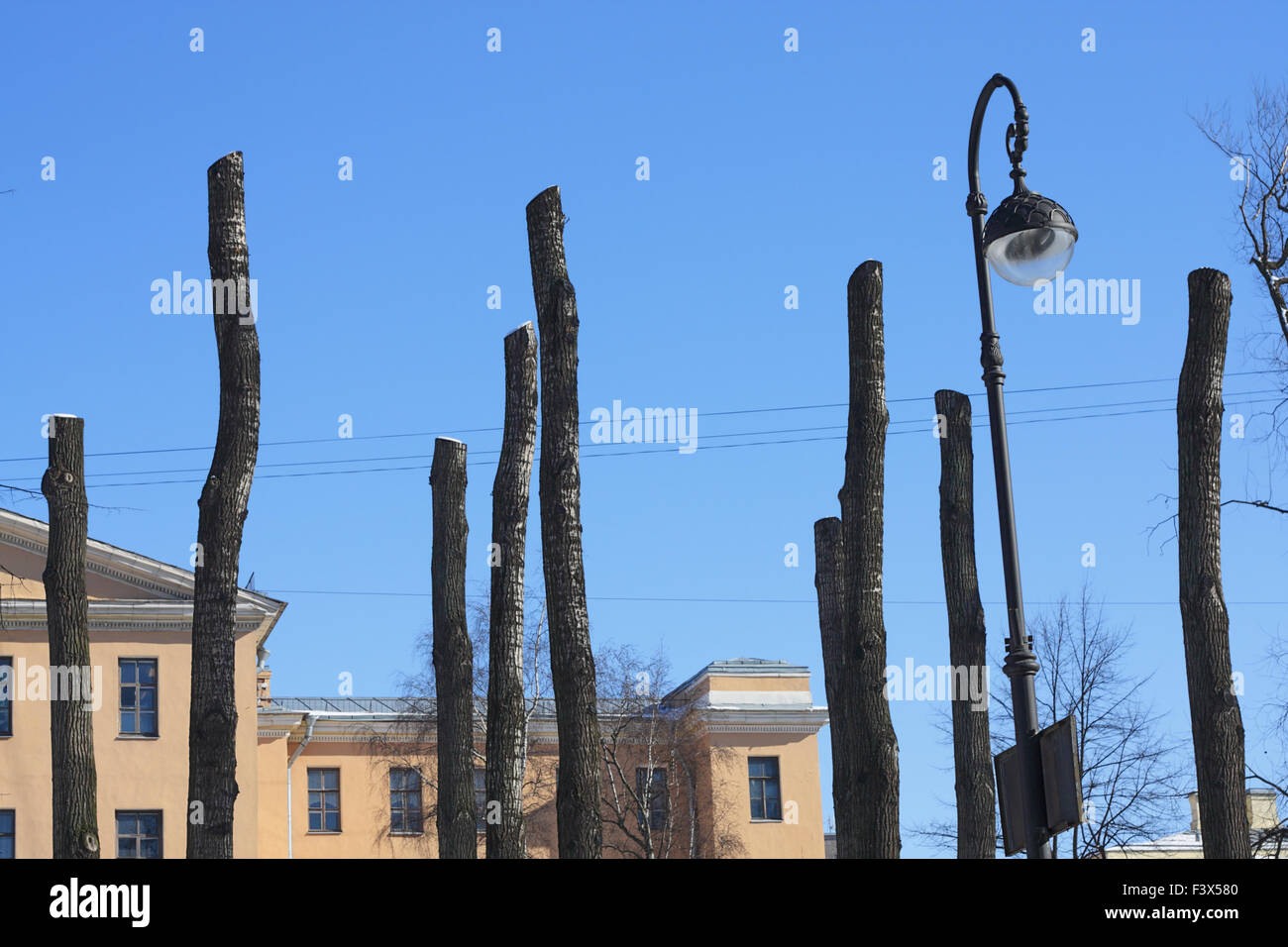 Clipped the tops of trees - Stock Image
