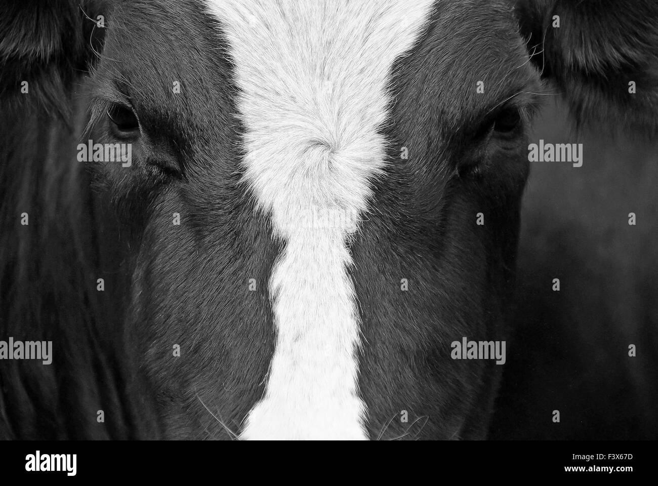 Monitoring Stock Photo