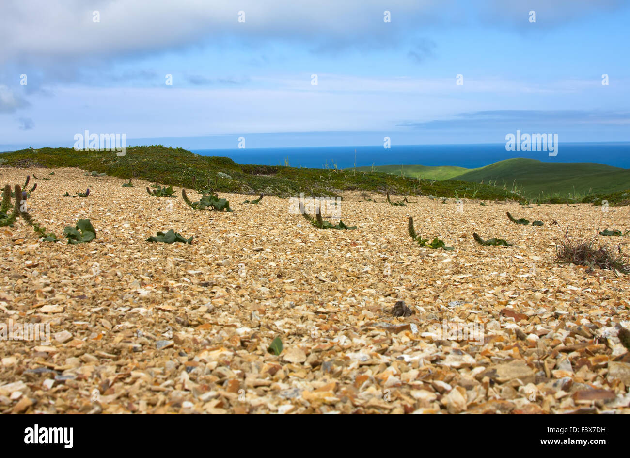 Bering Stock Photos & Bering Stock Images - Alamy