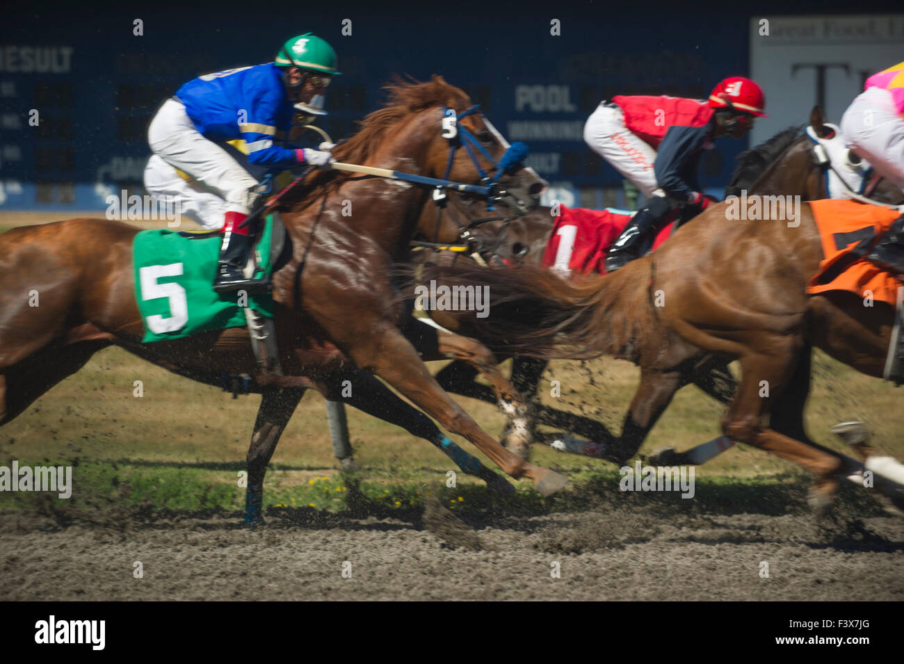 Thoroughbred horse racing at Hastings Park Vancouver British Columbia - Stock Image