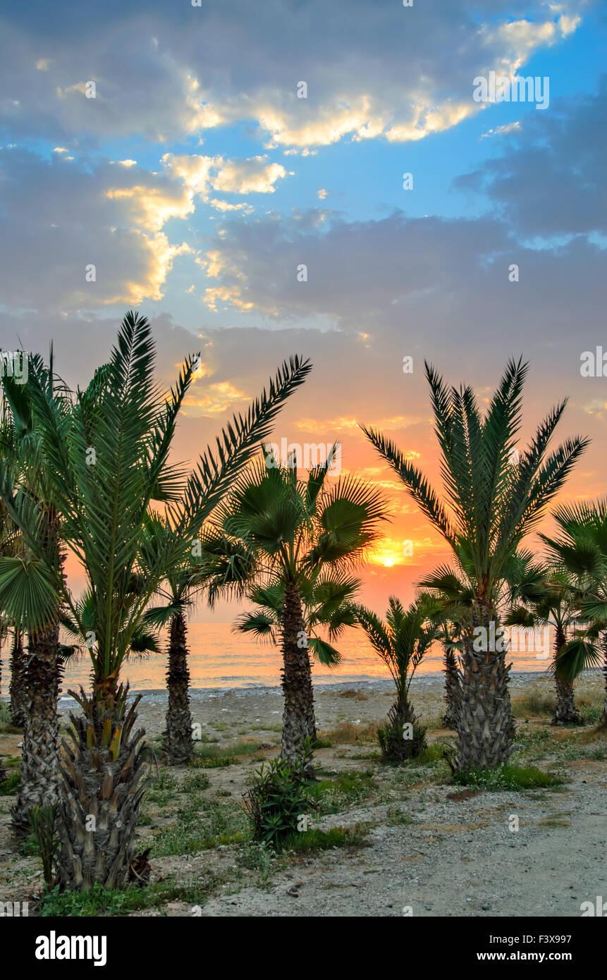 Sunset over palm beach Stock Photo