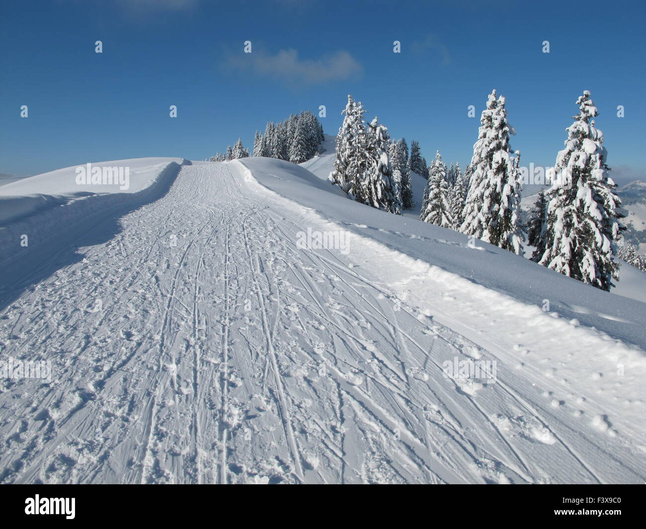 Sledging path, snow covered spruces - Stock Image
