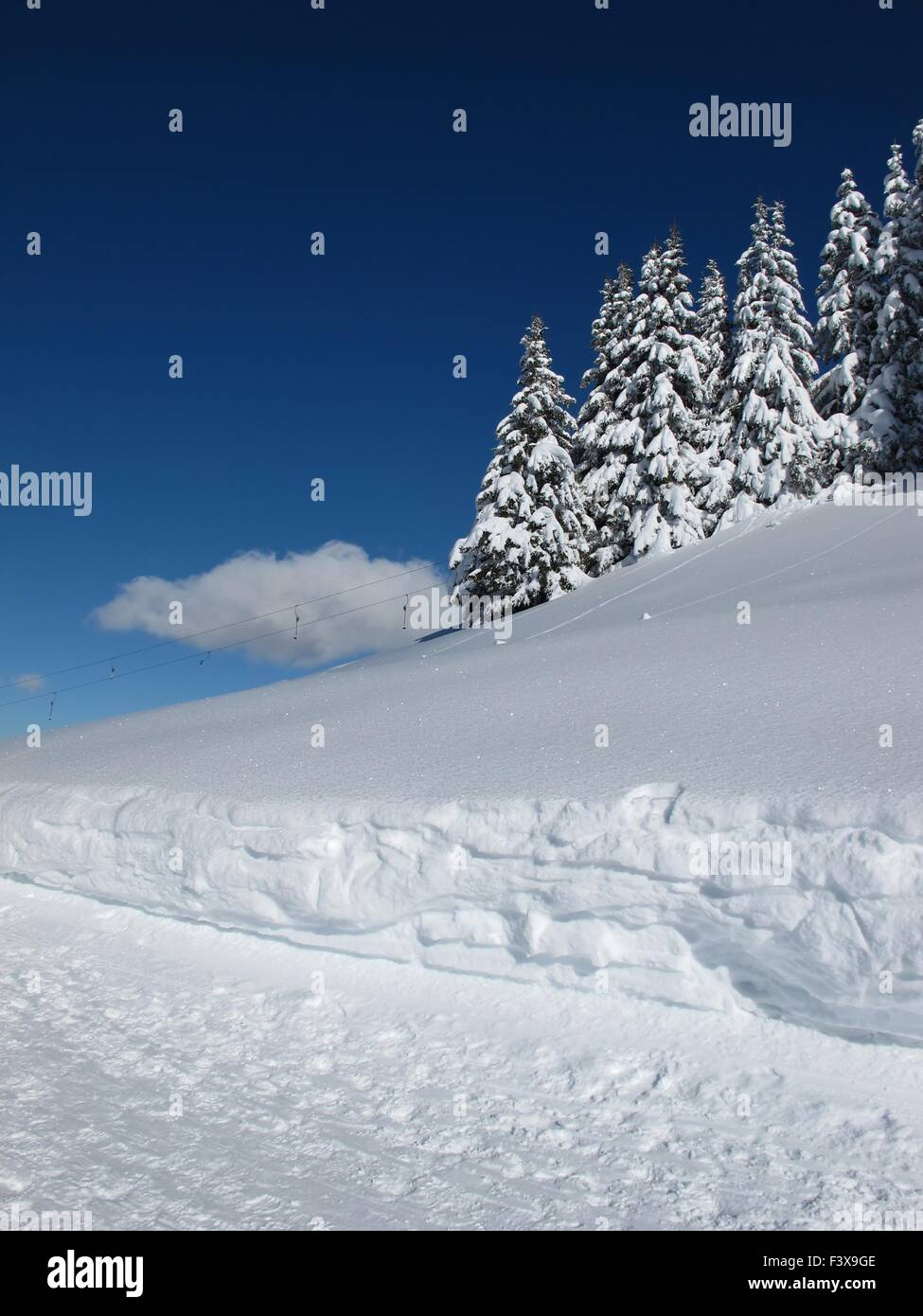 Snow covered spruces and cloud - Stock Image