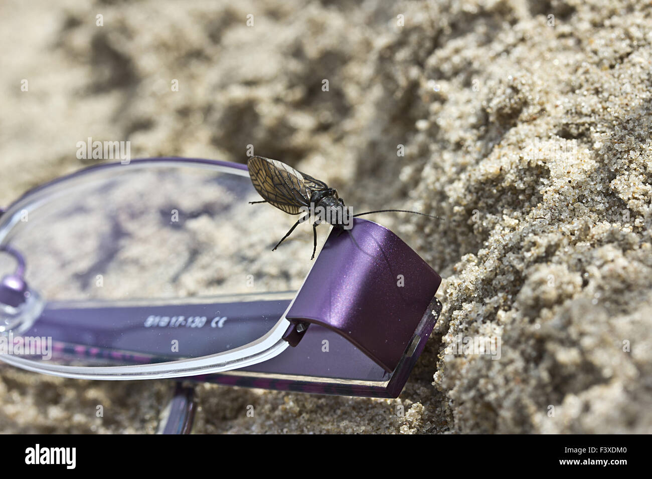 insect and eye glasses Stock Photo
