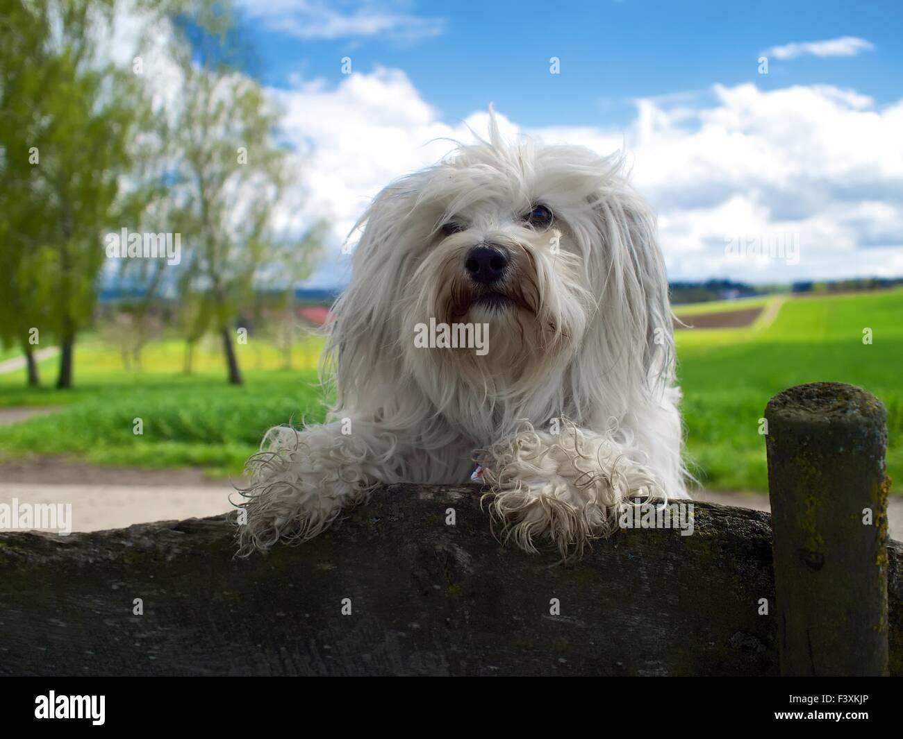 Cool Dog - Stock Image