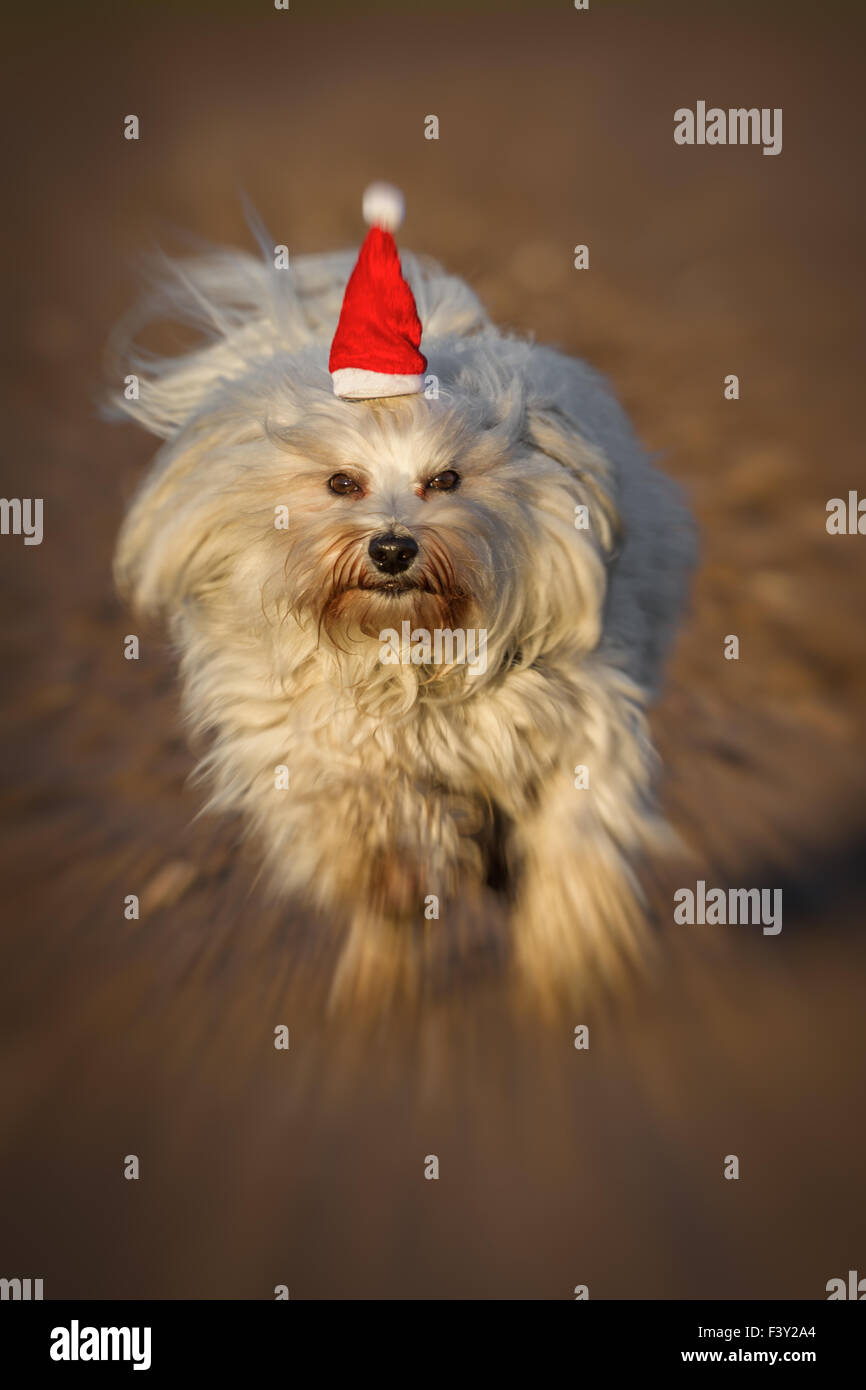 Weihnachtshund Christmas Dog Stock Photos & Weihnachtshund Christmas ...