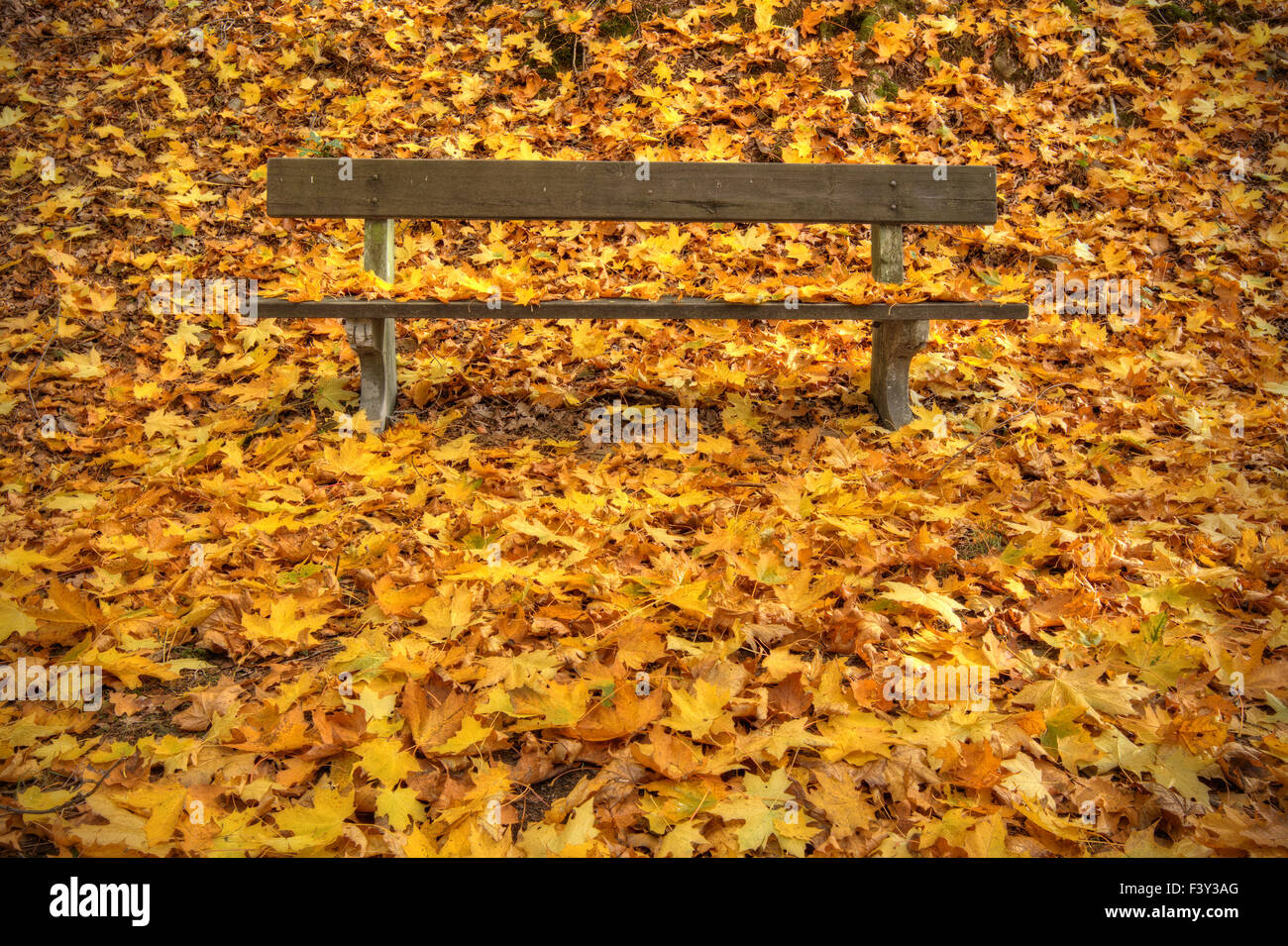 Autumn bench in park - Stock Image
