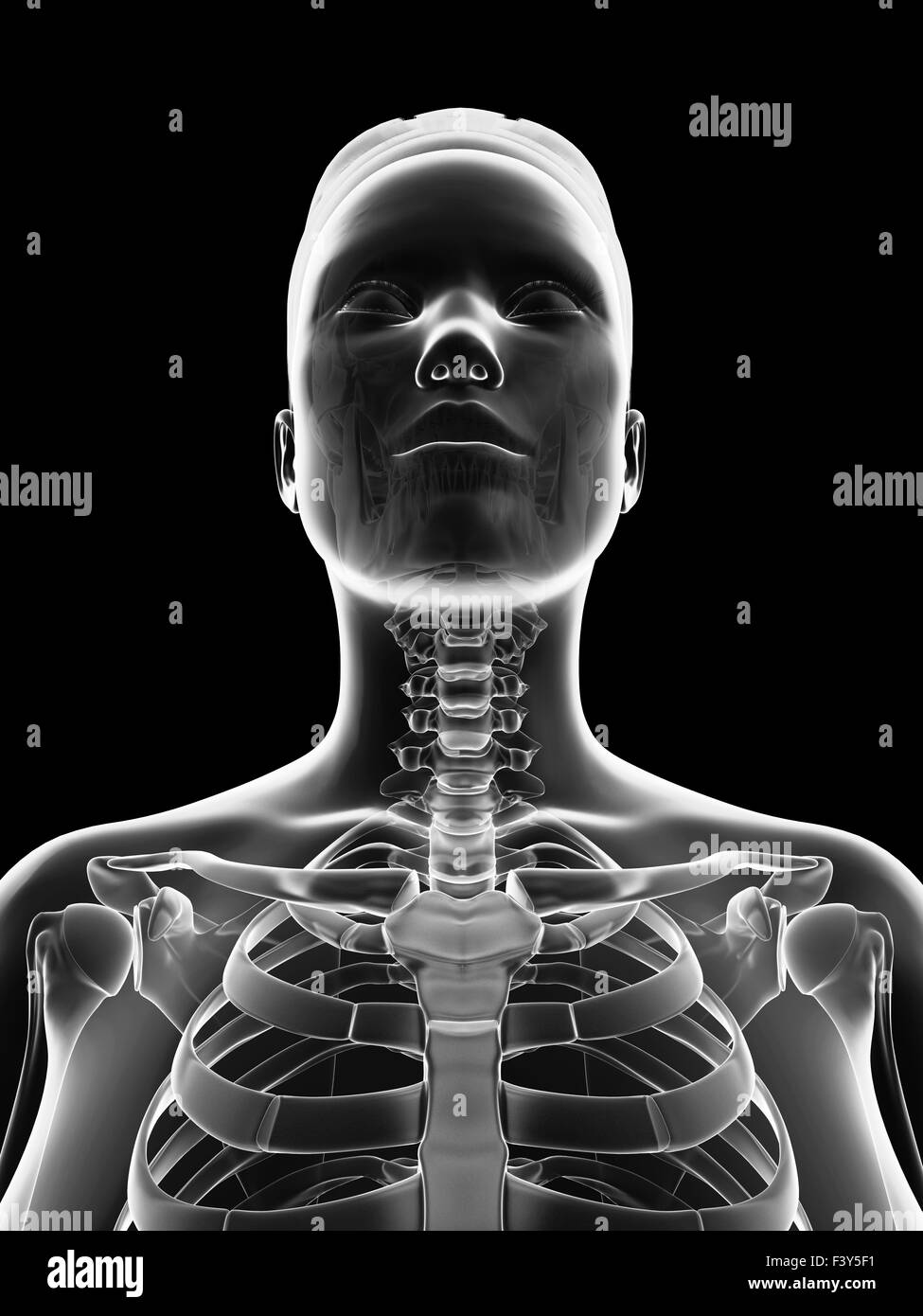 Normal neck bones stock photos normal neck bones stock images alamy transparent female skeleton neck stock image ccuart Gallery