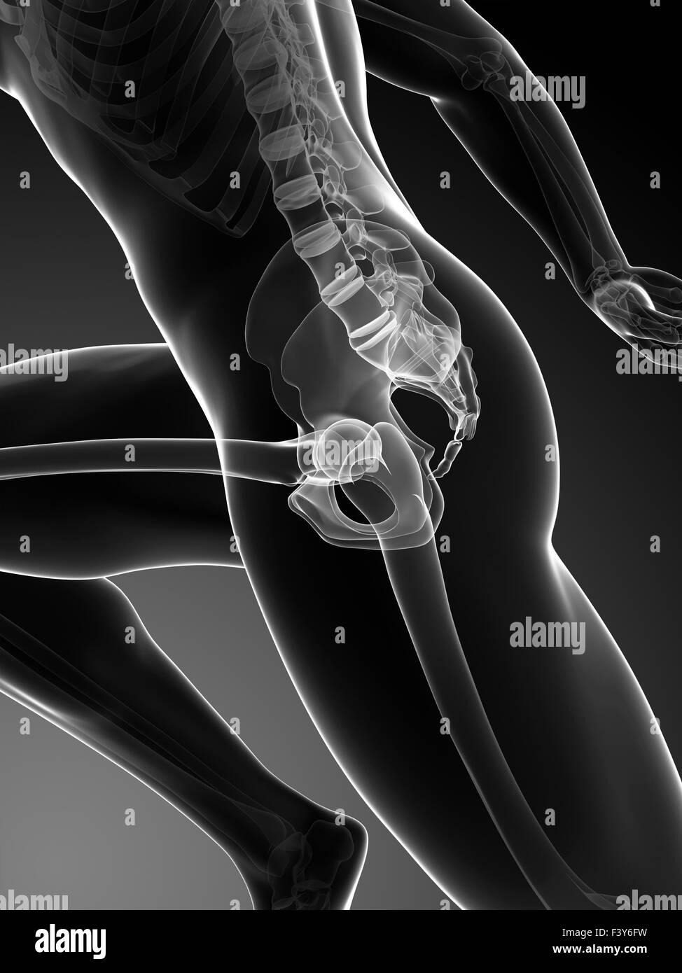 Human Anatomy Running Black and White Stock Photos & Images - Alamy