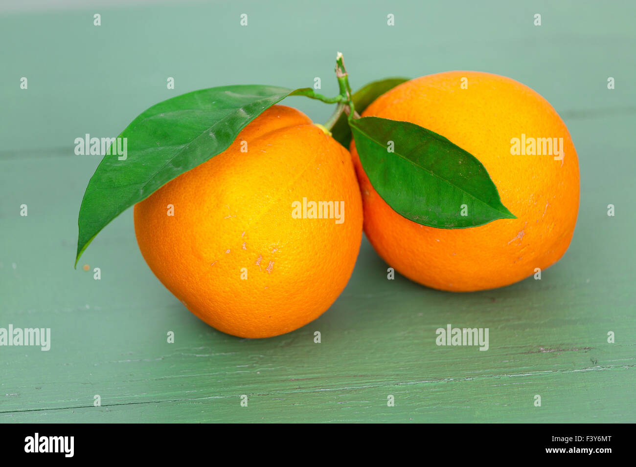 Two big Oranges with Leaves - Stock Image