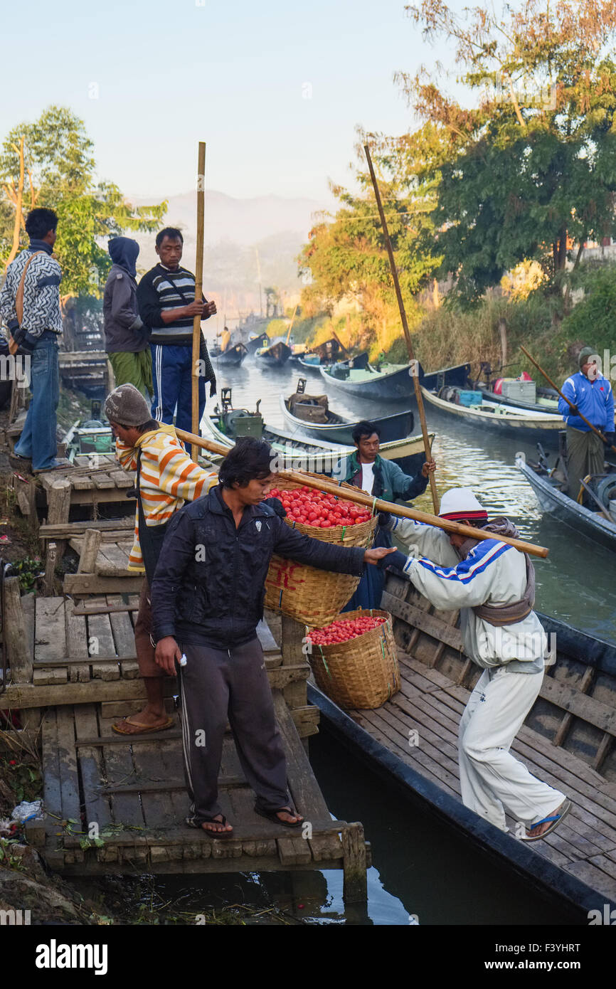 Farmers unload tomatoes, Nyaung Shwe, Myanmar - Stock Image