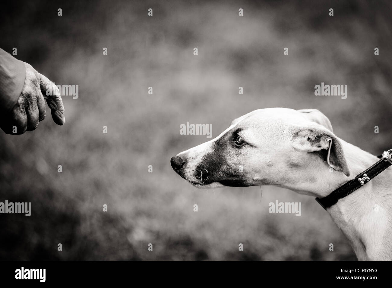 Cautious approach - Stock Image