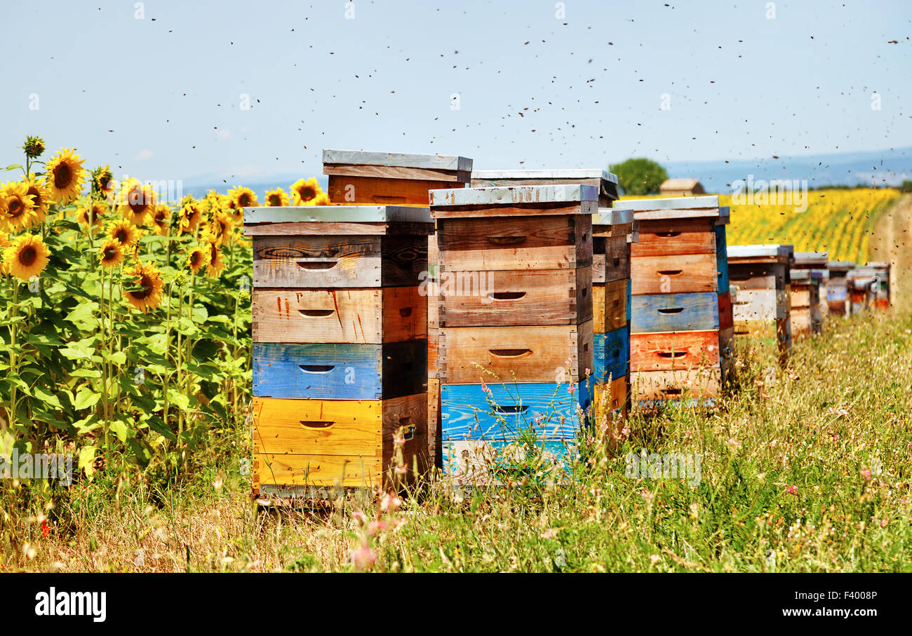 Bee hives. - Stock Image