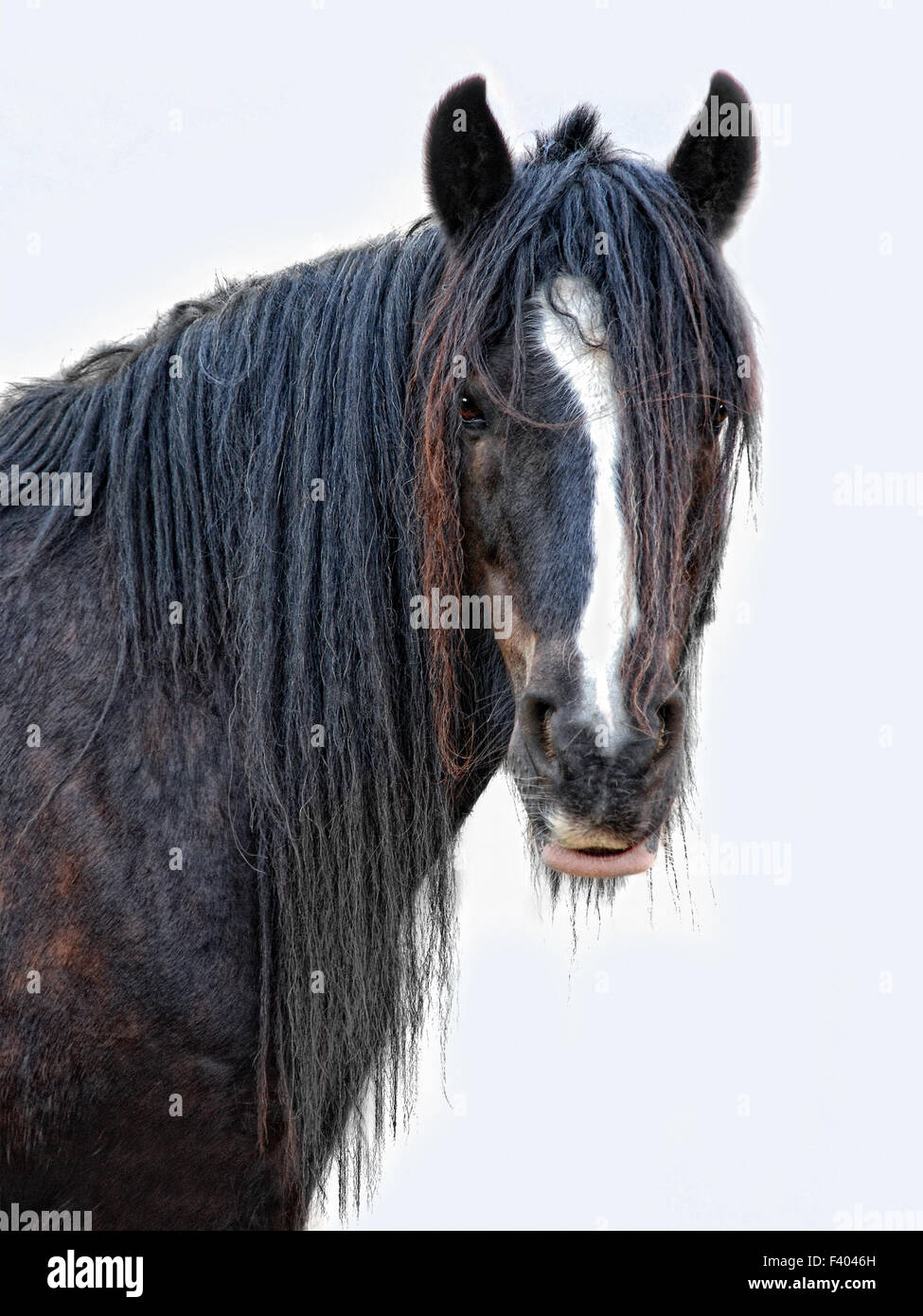 horse with no name - Stock Image