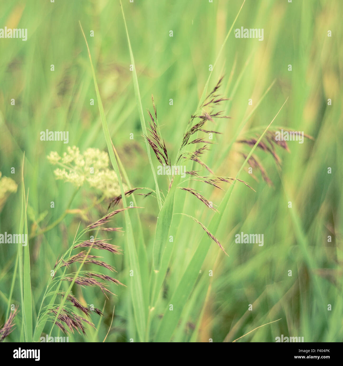 Retro Filtered Spring Grasses - Stock Image