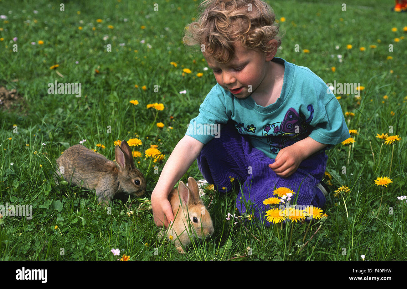 child, youngster, playing with rabbit - Stock Image