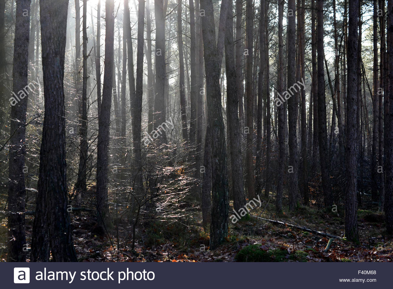 Mysticism with backlight. - Stock Image