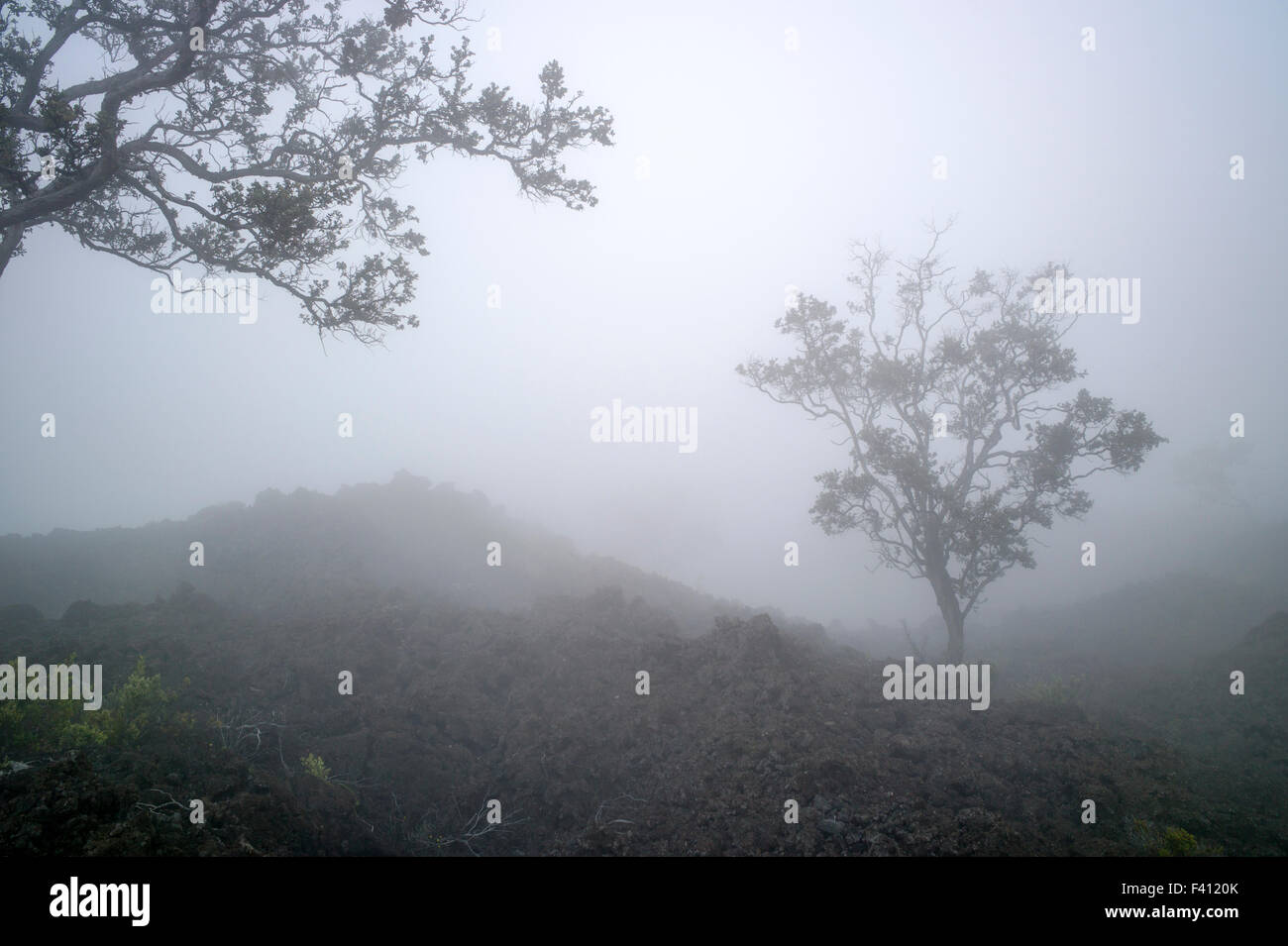Foggy view of lava rock fields & trees near Mauna Loa Road, Hawai'i Volcanoes National Park, Big Island, - Stock Image