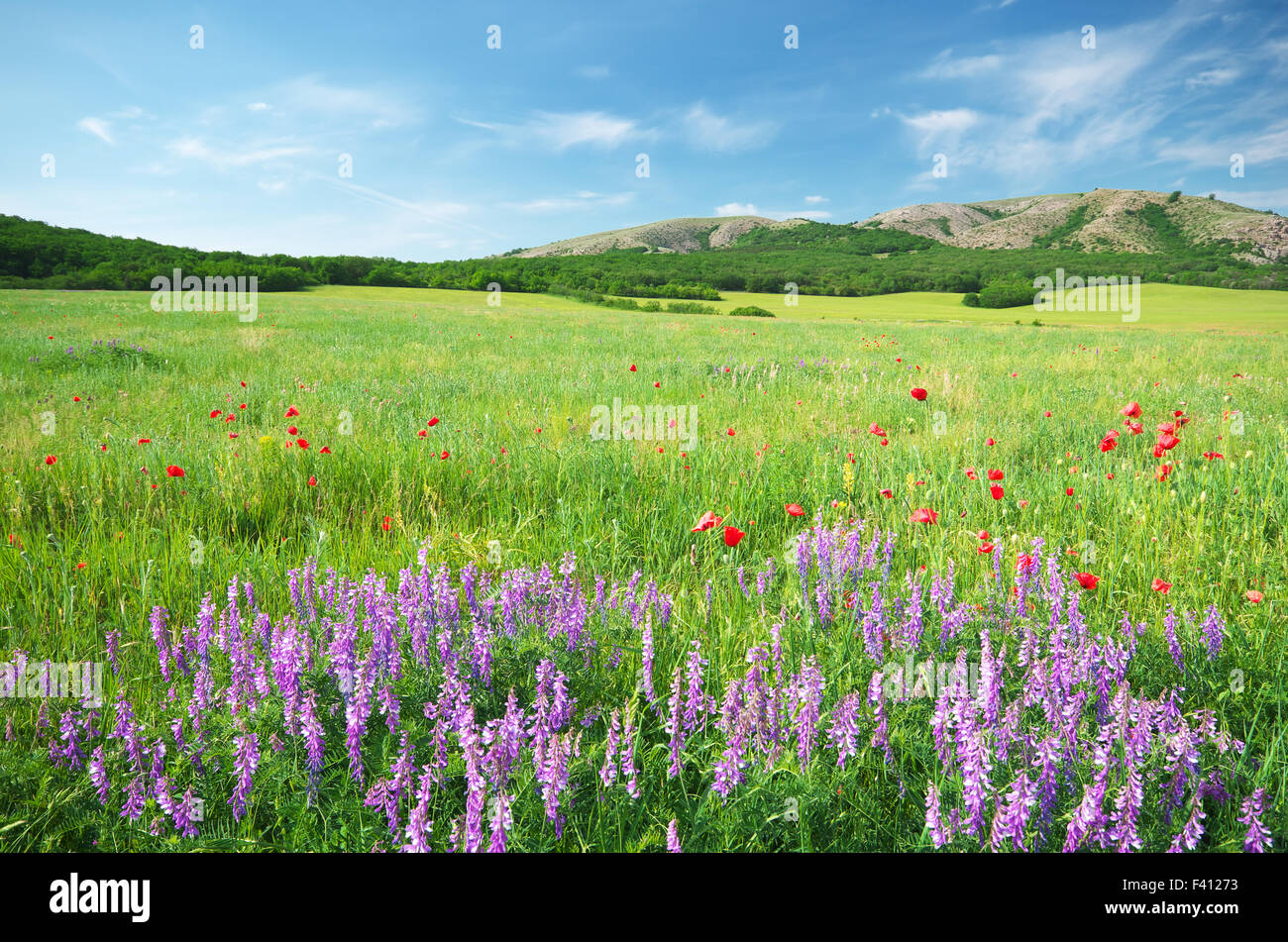 Spring meadow in meadow. Beautiful landscapes. - Stock Image