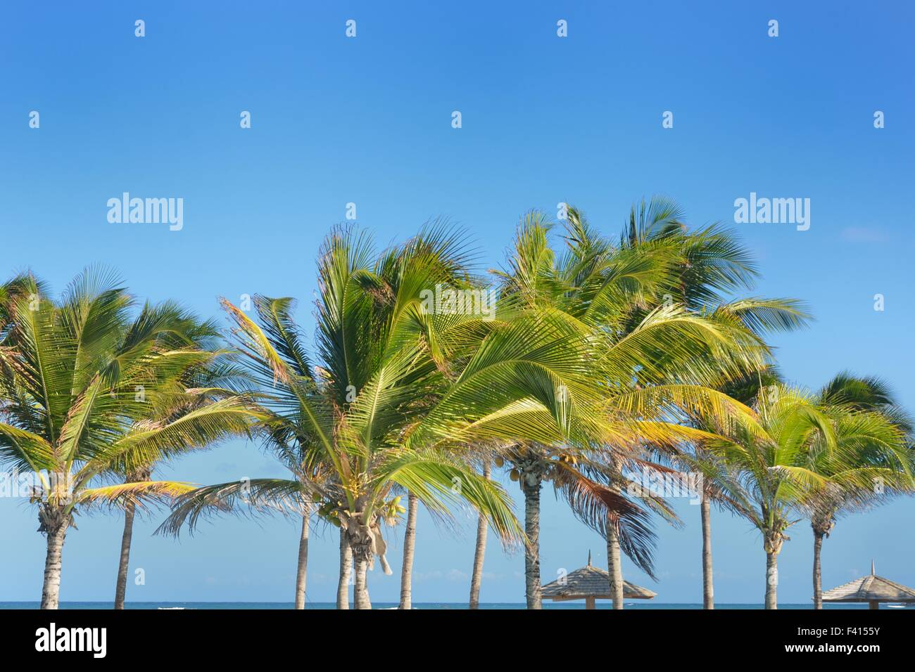 line  of palm trees - Stock Image