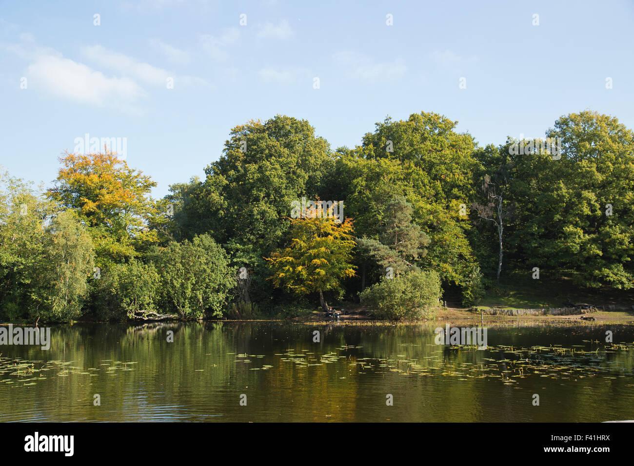 Keston Ponds in Autumn in Keston Bromley Kent uk - Stock Image