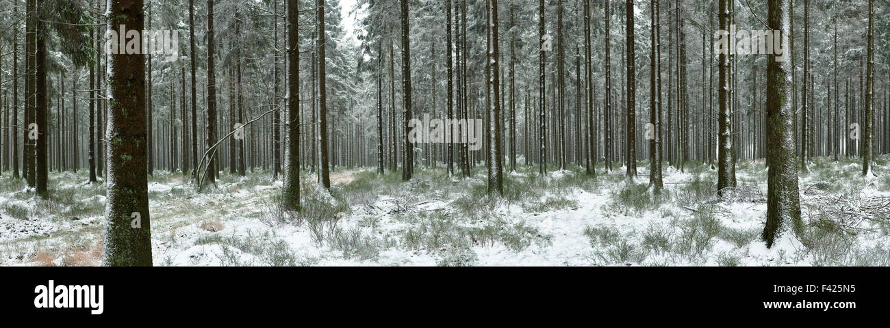 Winter panorama of forest landscape in the Belgian Ardennes - Stock Image