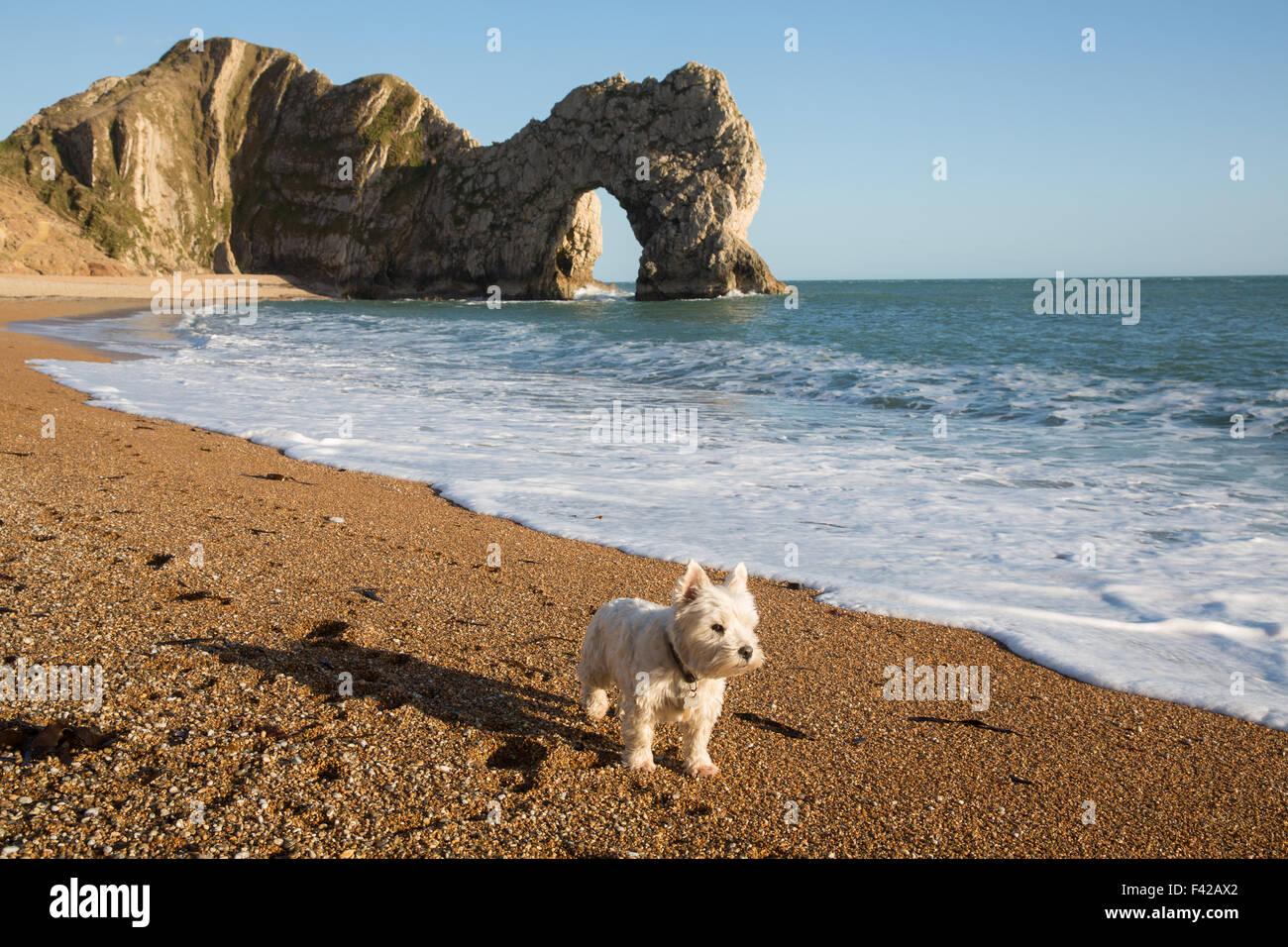 a dog on the beach at Durdle Door, Jurassic Coast, Dorset, England, UK - Stock Image