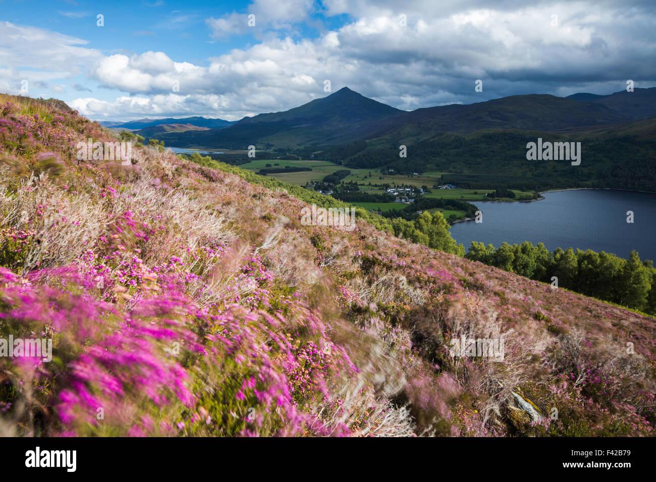 heather on the hillside above Loch Rannoch with Schiehallion beyond, Perth & Kinross, Scotland, UK - Stock Image