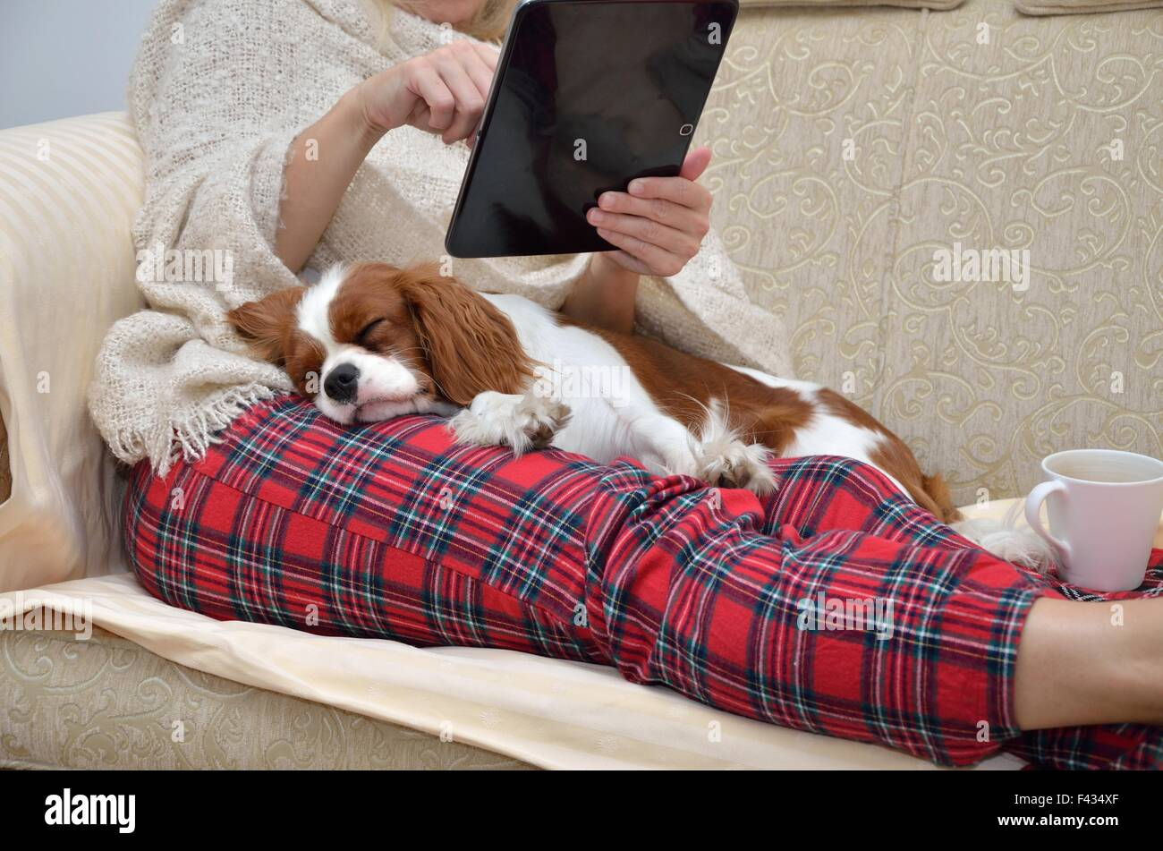 Woman in cozy home wear relaxing on sofa with a sleeping cavalier dog on her lap, holding tablet and reading - Stock Image