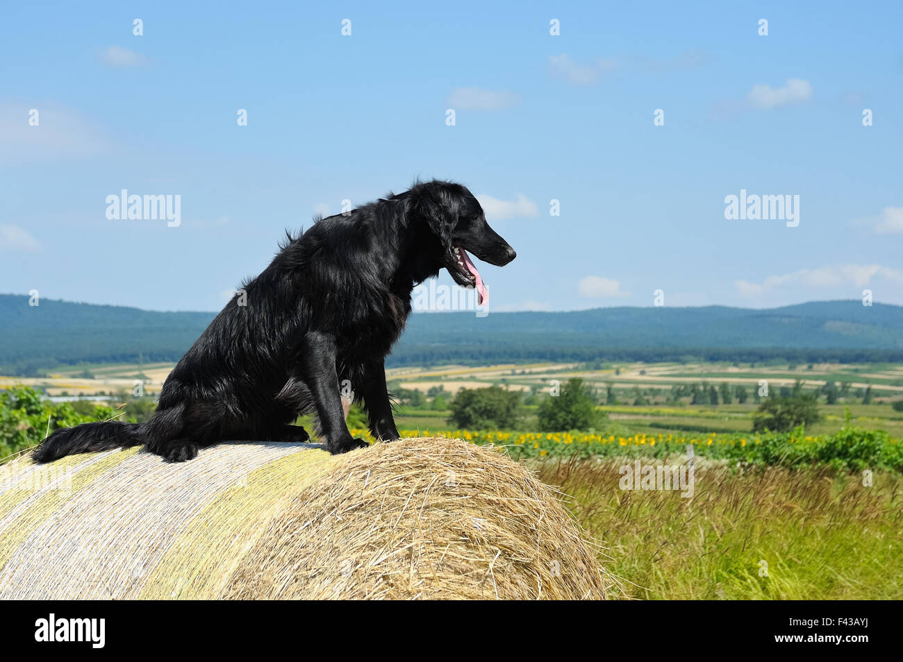 Sitting On A Hay Bale Stock Photos & Sitting On A Hay Bale Stock