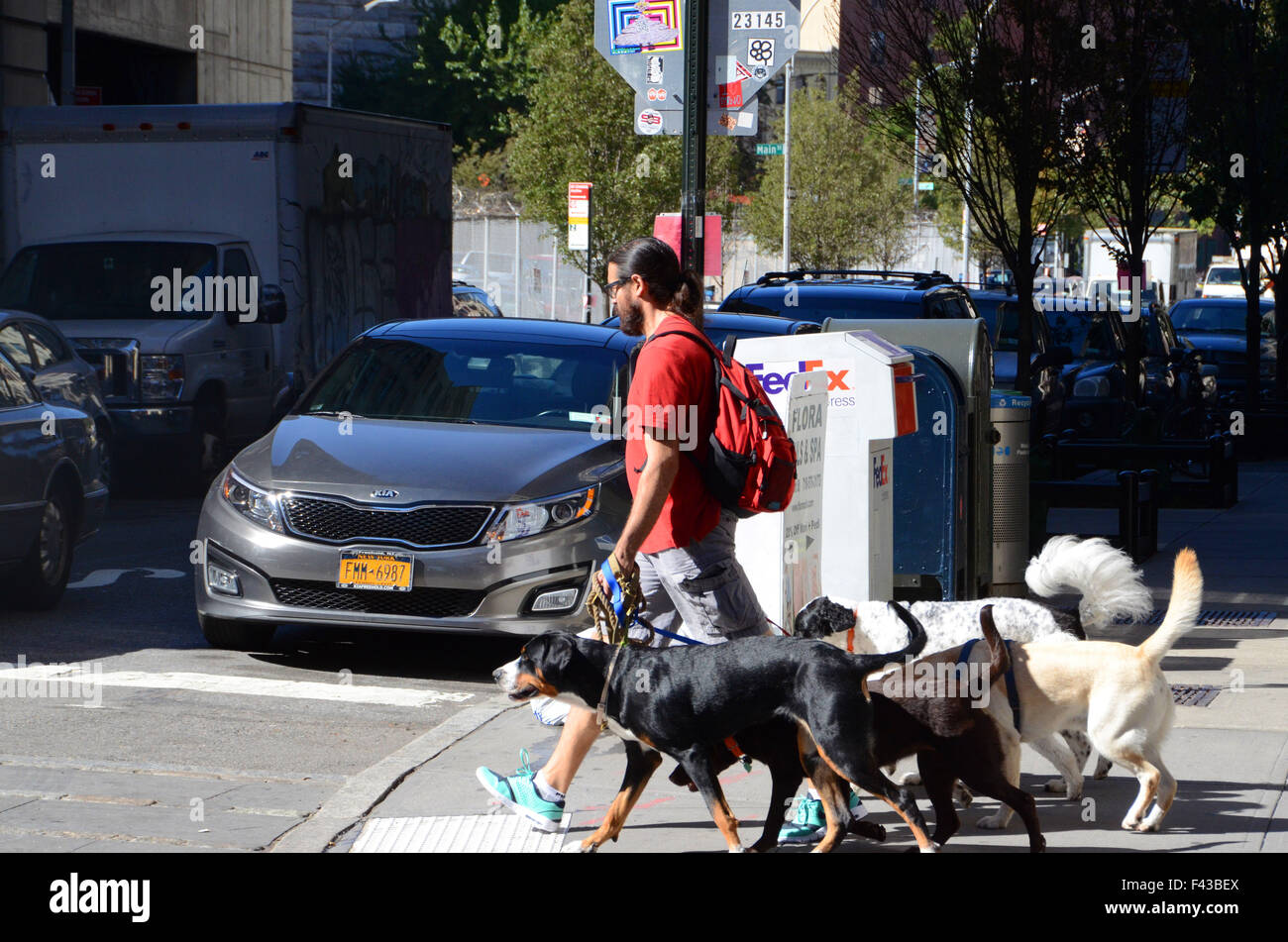 dog walker with dogs in brooklyn nyc - Stock Image