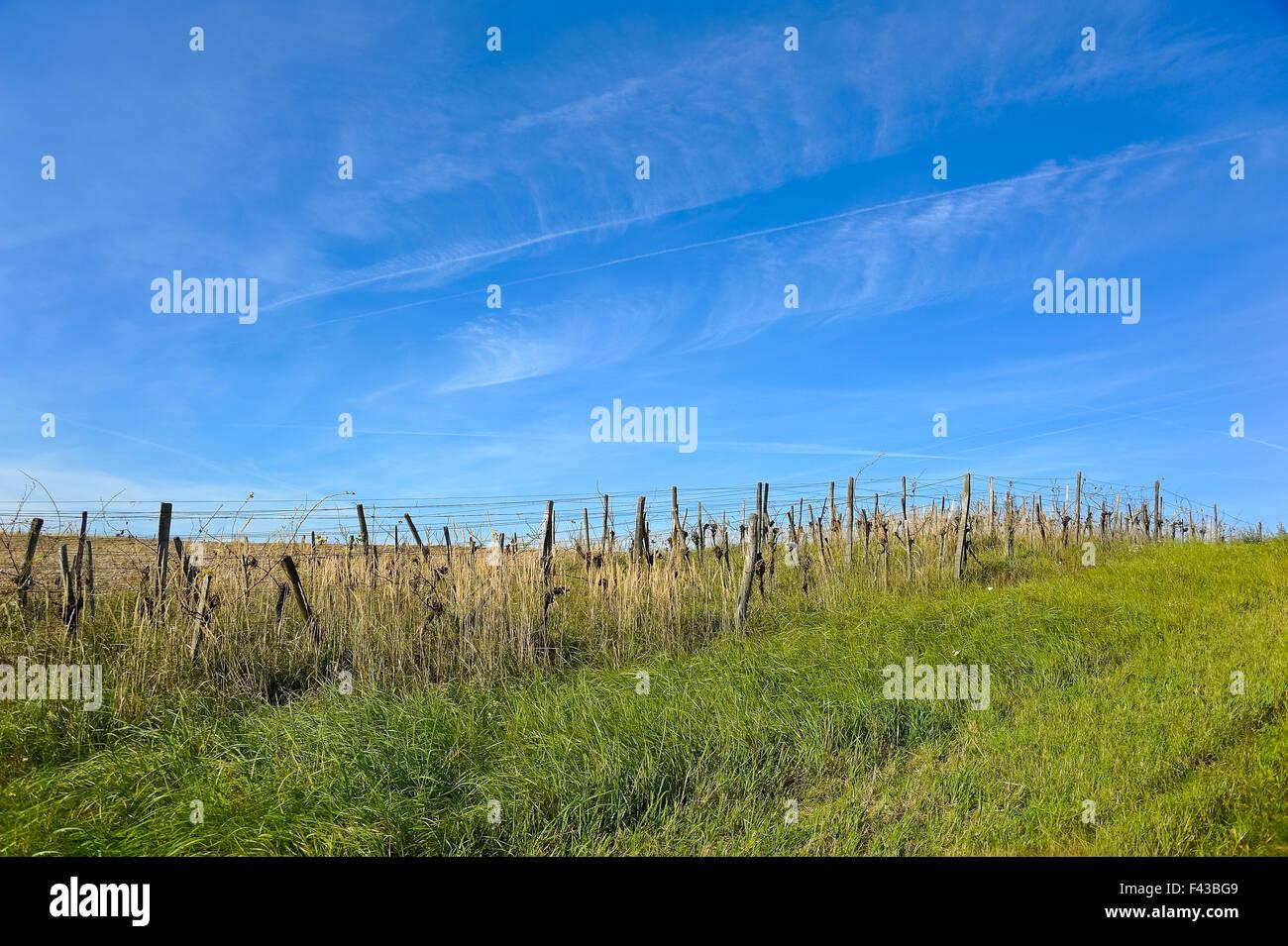 Disused Weingarten Burgenland Stock Photo