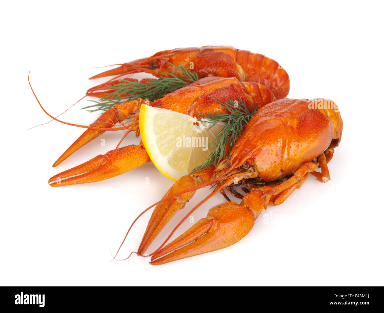 Boiled crawfishes with lemon slice and dill. Isolated on a white background - Stock Image