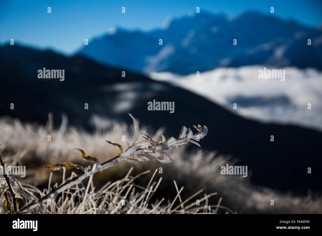 Frost on a branch with the Combin in the background - Stock Image
