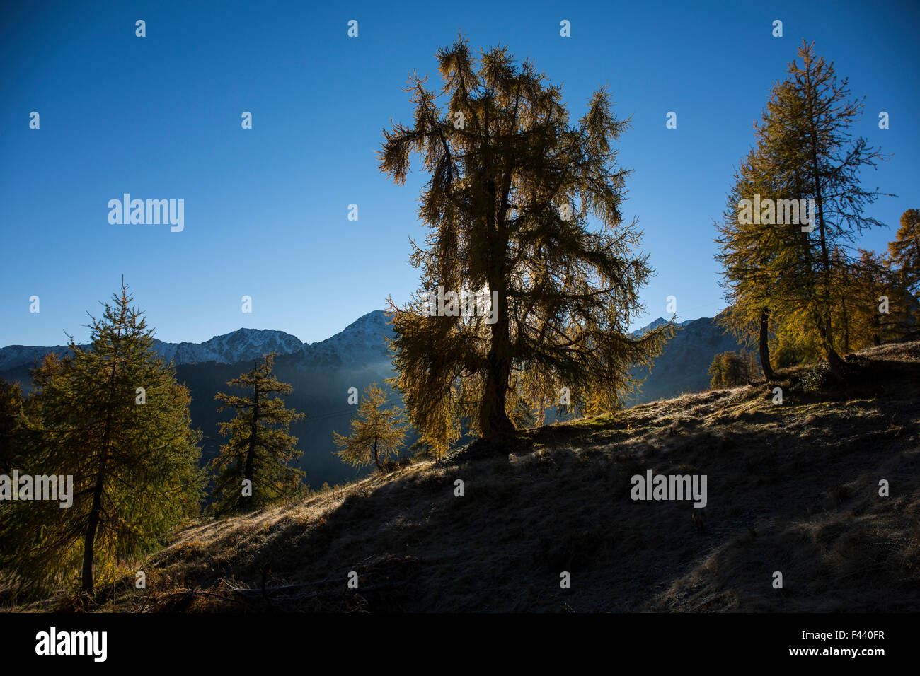 Tree agains rising sun - Stock Image