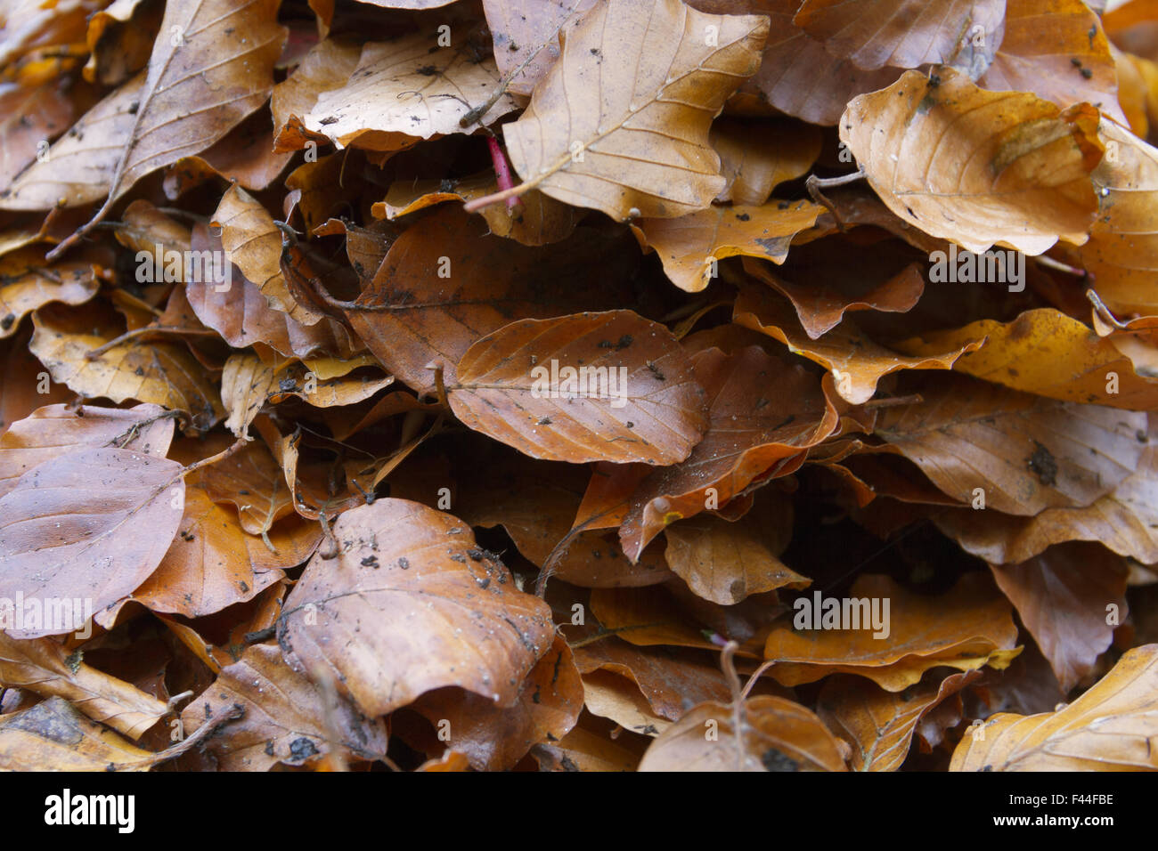 foliage leaves - Stock Image